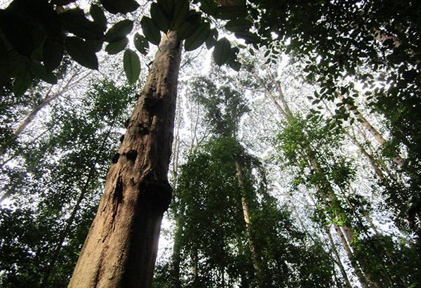 towering-tress-malaysia-5